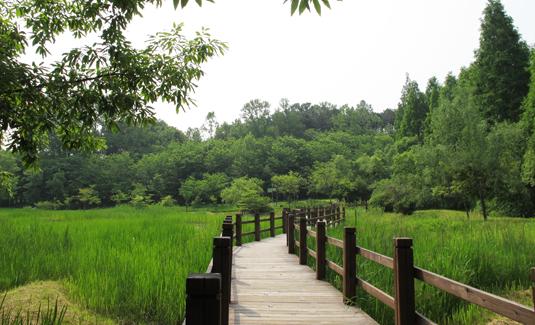 강씨봉자연휴양림 이미지