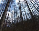 겨울 숲 이미지