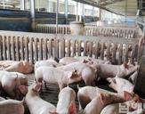 돼지농가 이미지
