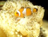 전경에 노란 줄무니 열대어, 배경에 산호가 있는 이미지