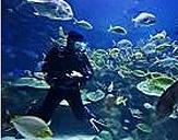 스쿠버 다이버가 바다속에서 물고기와 함께 있는 이미지