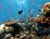 물고기와 산호가 있는 바닷속 이미지