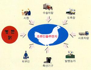 조류인플루엔자의 발병은 시장, 수송차량, 도축장, 사료차량, 발병농가, 축산기구, 외부인 등의 요인이 있다는 의미의 이미지