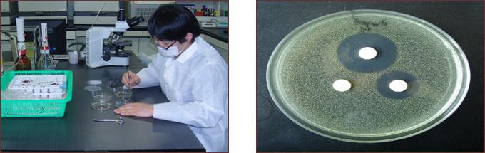 미생물 검사 이미지
