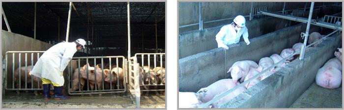 가축의 생체검사 이미지