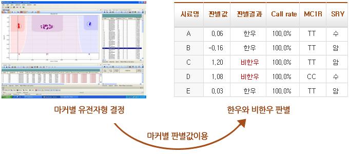 1.마커별 유전자형 결정 2.마커별 판결값이용 3.한우와 비한우판별