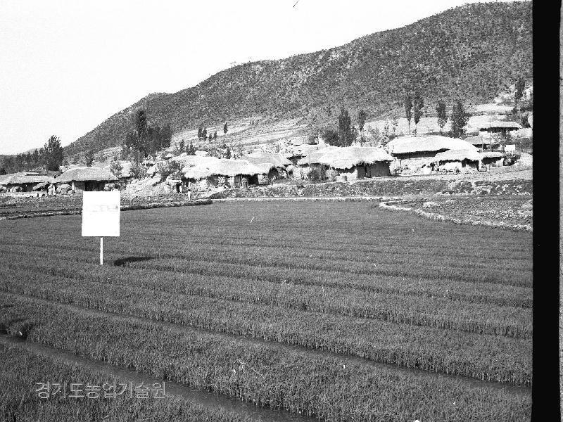 새마을사업으로 주택개량사업이 실시되기전 대부분의 농촌은 초가집이 주를 이루고 있었다. 이제는 민속촌에서만 볼 수 있는 풍경이다.