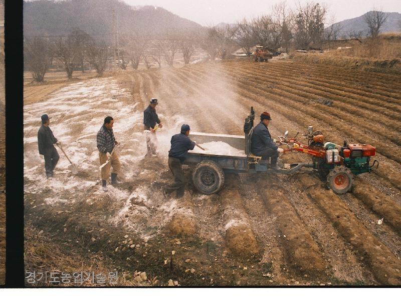 토양개량을 위해 공급된 규산질비료를 밭에 살포하고 있다.