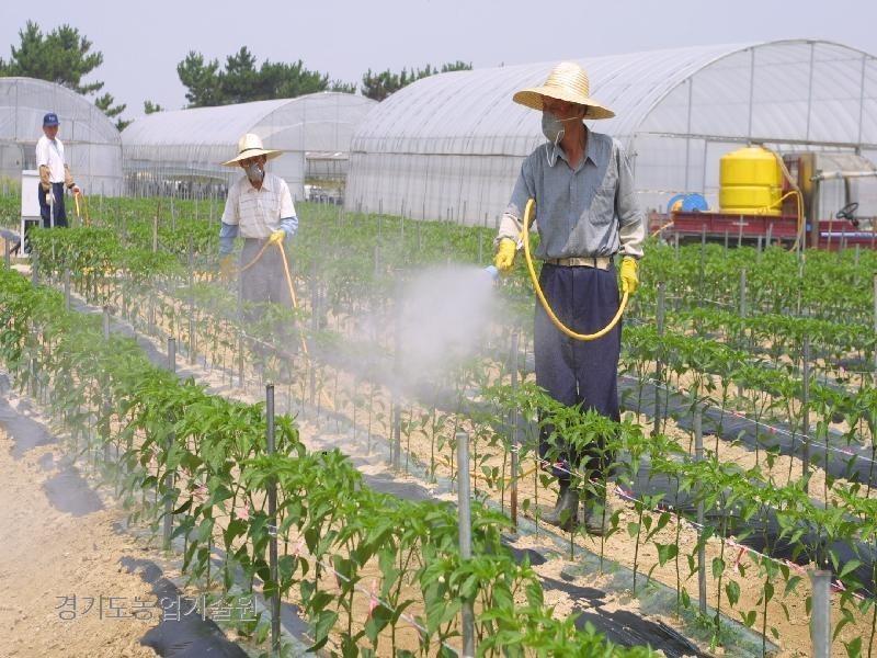고추는 병해충이 발생하면 품질이 떨어지고 수확량도 떨어진다. 특히 탄저병은 적기에 방제하는 것이 중요하다.