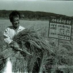 종자용 벼 수확
