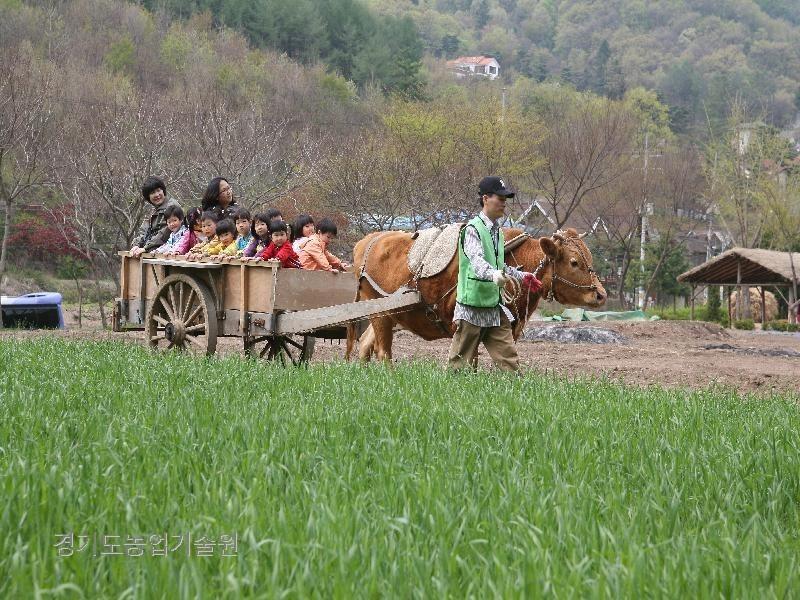 현장학습체험 장소로 인기가 많은 동물농장에 어린이들이 즐겁게 체험하고 있다.