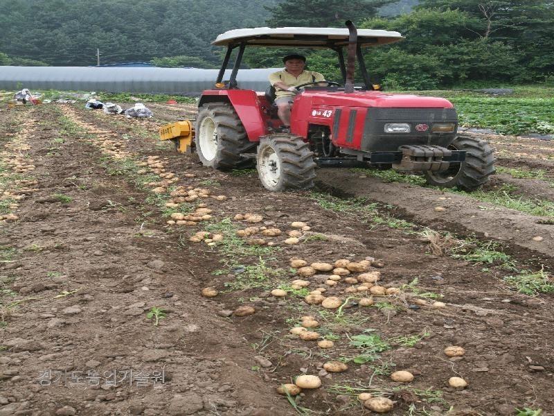 노동력이 부족한 농가에서 기계를 이용하여 감자를 수확하고 있다.