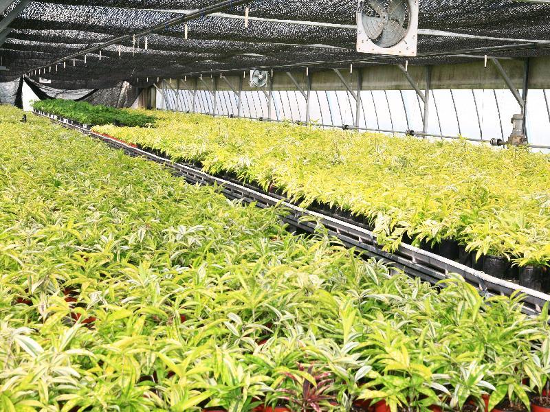 시설하우스에서 다양한 화훼를 재배하는 농민