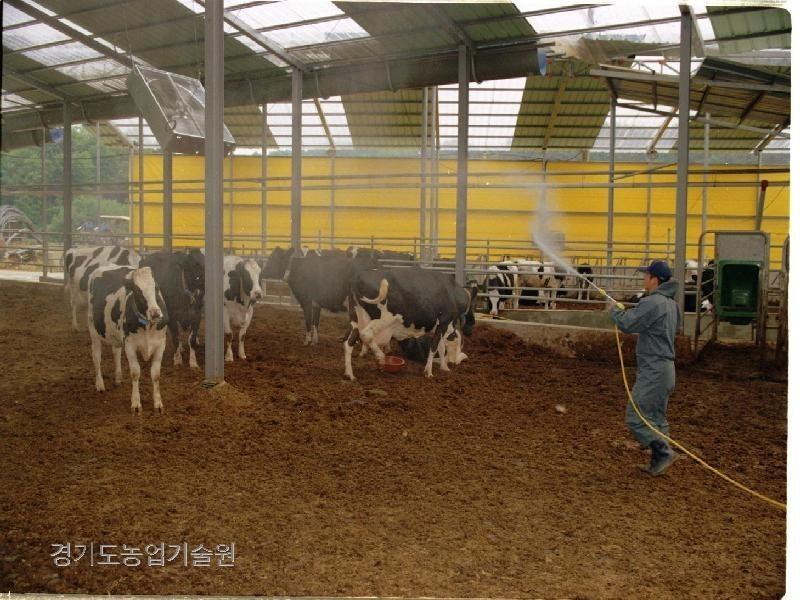 구제역 예방을 위해 젖소를 사육하는 축사를 소독하고 있다. 구제역을 예방하기 위해서는 축사뿐 아니라 주변도 소독해야 한다.