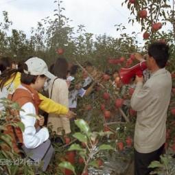 농업기술원을 관람하러 온 학생들이 빨갛게 익은 사과품종을 직원이 직접 나와 설명하고.