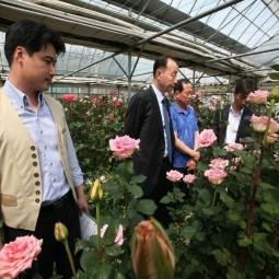 장미 신품종 평가회에 참석한 관계자들이 장미를 관찰하고 있다.