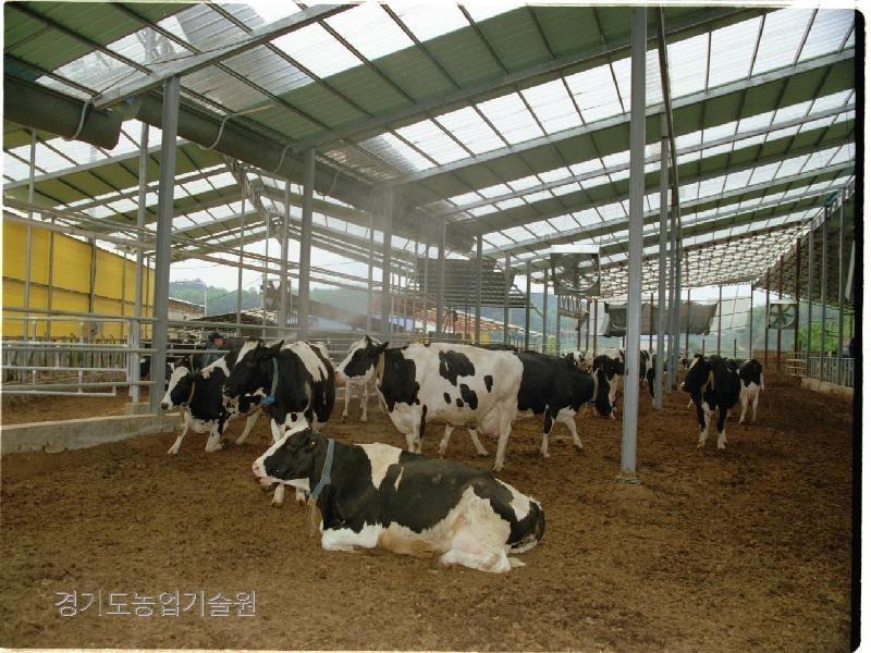 구제역 확산을 방지하기 위해 젖소를 사육하는 축사를 소독하고 있다.