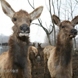 사슴농장_03