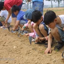 어린이 농사체험학습에 초청된 어린이들이 농업기술원 시험전시포장에 콩을 심고 있다.